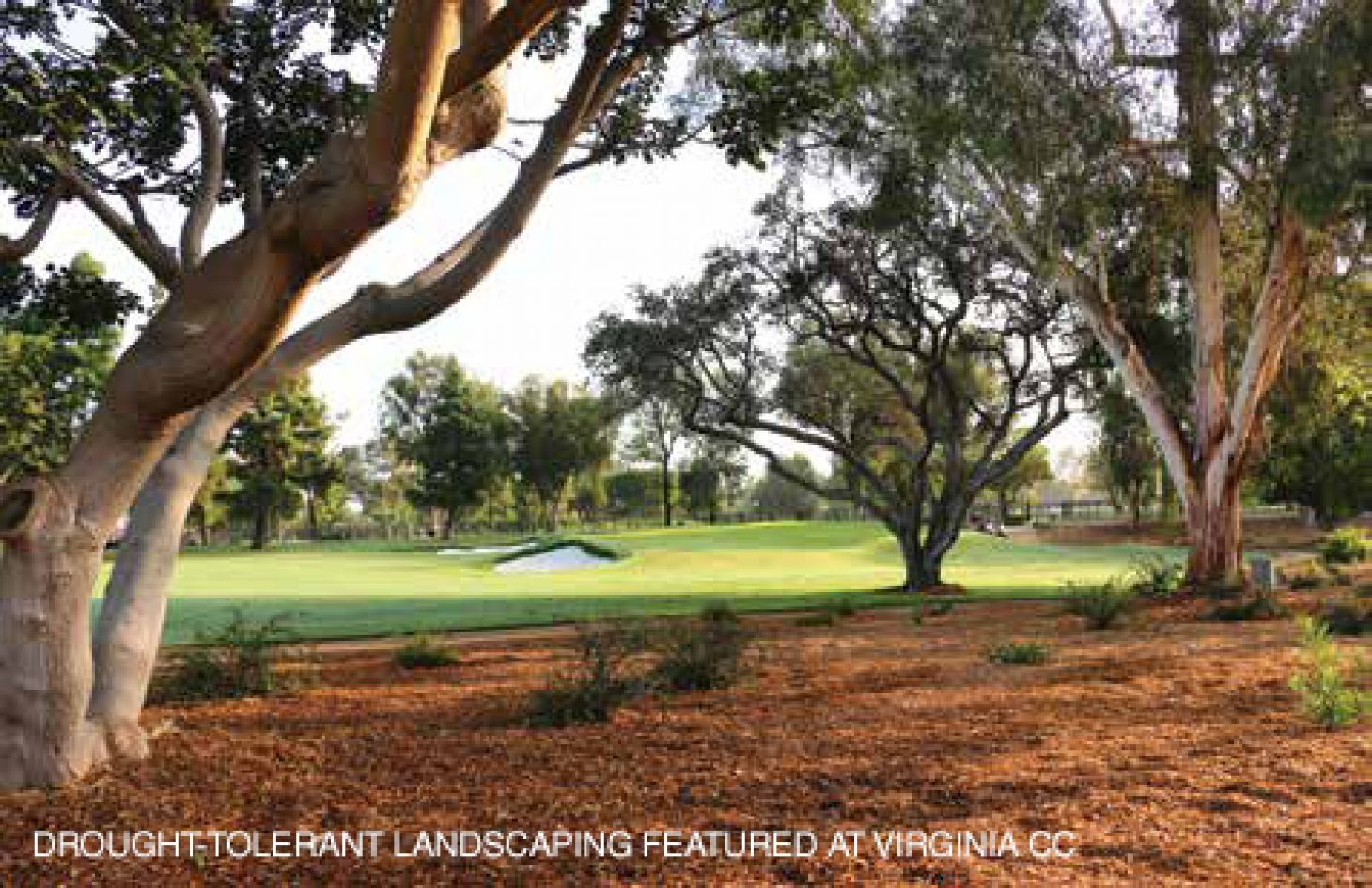 drought-tolerant landscaping featured at virginia cc